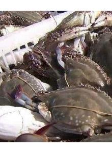 东海渔场喜迎丰收 今年海鲜产量和质量均好于往年