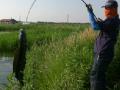 路亚黑鱼视频第十八集 轻雷二代 控蛙速度的快慢分析 (142播放)